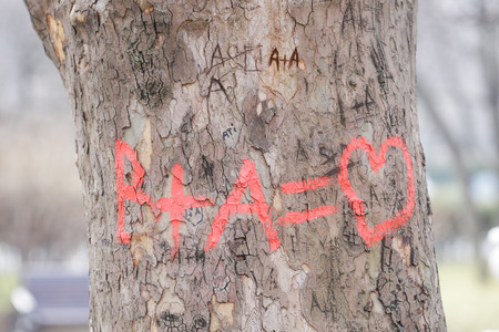 Letters and symbols engraved on a tree's bark