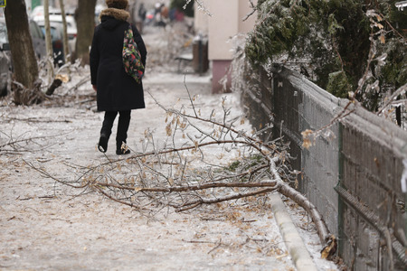 Broken tree branches on the sidewalk due to the weight of the ice after a freezing rain phenomenon Banco de Imagens