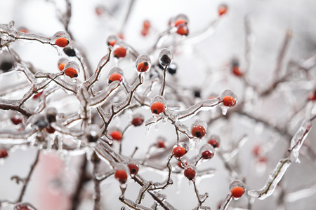 Details with frozen vegetation after a freezing rain weather phenomenon Stok Fotoğraf