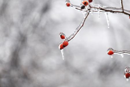 Details with frozen vegetation after a freezing rain weather phenomenon