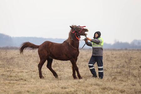 Pietrosani, Romania - January 6, 2019: Man handles an adorned horse before an Epiphany celebration horse race. Redakční