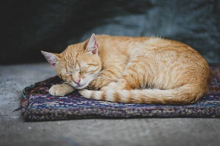 Orange cat rests on a rug on the ground