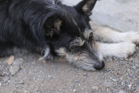 Old dog resting on the ground during a hot summer day