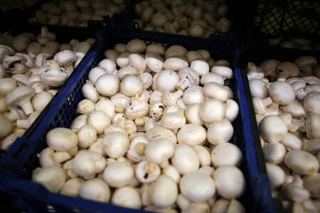 Fresh mushrooms on the fruits and vegetables aisle in a store