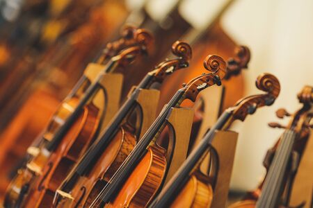 Details with parts of violins before a symphonic classical concert Reklamní fotografie