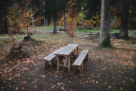 Wooden table and benches in the middle of a Romanian forest during a cold and rainy November day.