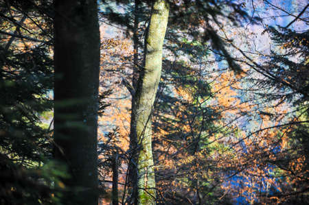 Details from a Romanian pine and broadleaf forest during a sunny late autumn day.