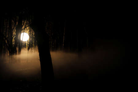 Moody image with a light globe used in cinematography in a dark forest at night with smoke above the ground - UFO concept.