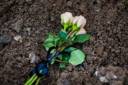 Details with white roses on a fresh grave dirt, during a cold winter day.