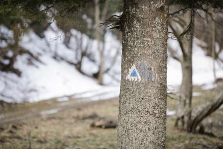 Details of a hiking trail sign on a fir tree in a forest from the Romanian Carpathian Mountains.