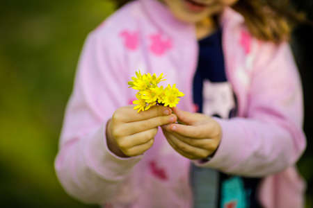 Shallow depth of field (selective focus) image with the hand of a little girl holding yellow spring flowers
