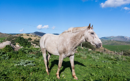 pastureland: White horse grazing. grazing the grass. In the countryside, it can burn the grass in the wild.