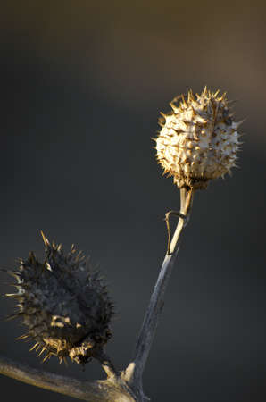 Plant Pod with Spikes