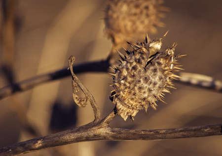 Spiky Pod Plant
