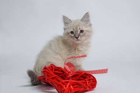 Cat strofe