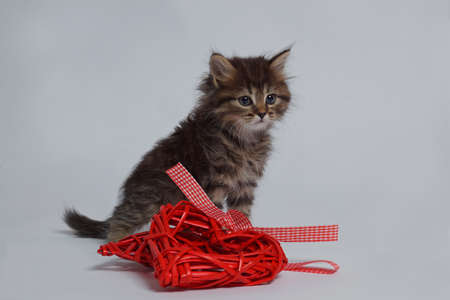 Cat playing red thread