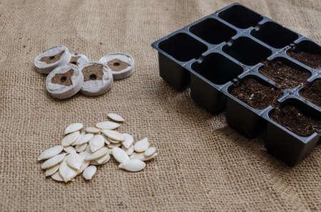 turba: Una bandeja de turba para el inicio de los montículos de semillas dentro de