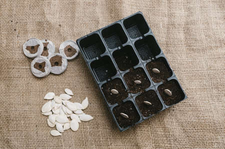 potting: Seeds planted in the potting shed. Horizontal format.