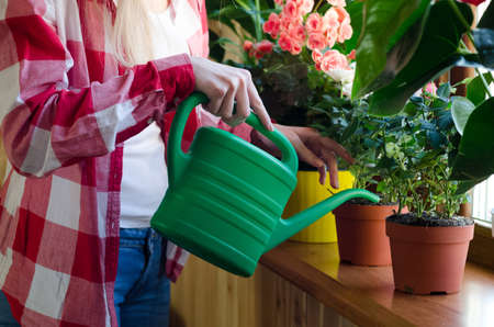 Hand watering a home plant with green can