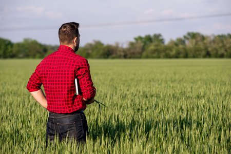 Young handsome farmer with tablet standing in wheat field. Man with beard. Standard-Bild