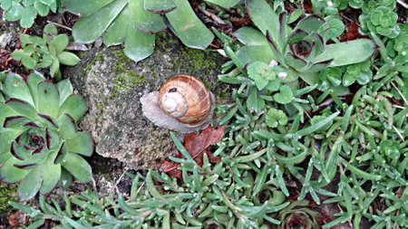 Snail alongside the trail on the GR 65
