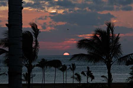 Sunset over palm trees near Waikoloa on the Big Island of Hawaii