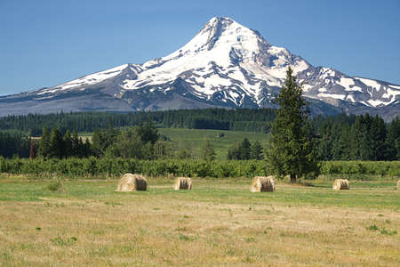 Mt. Hood in the Oregon Cascade Mountains with a hay field in the foreground