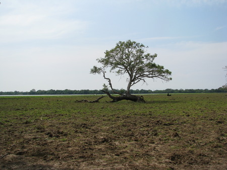 lonely tree: Lonely Tree - Rustic Stock Photo