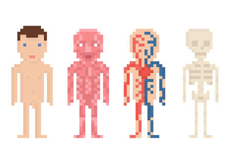 Human Body Anatomy - nude body, muscle, blood circle and sceleton, pixel art illustration on white Ilustração