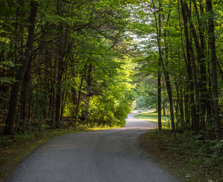 road and path through: Country road with forest trees on either side at late afternoon Stock Photo