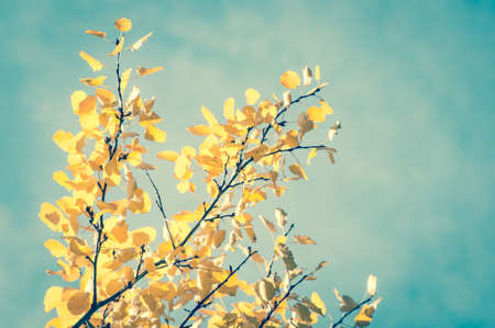 Sunny autumn day and colorful leaves in front of vintage blue sky Stock Photo