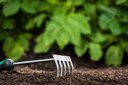hark: Gardening tool in the soil in front of green leaves Stock Photo