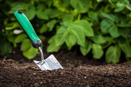 Gardening shovel in the soil in front of green leaves