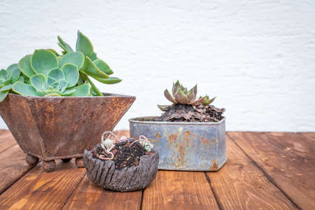 Small plants growing in old rusty flowerpots