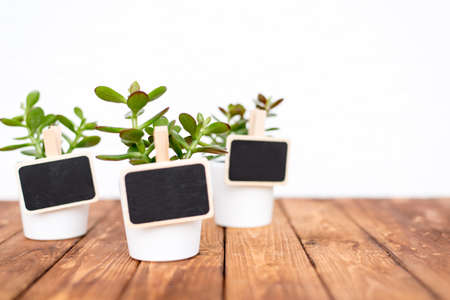oxidated: Cute pot plants with empty name tags