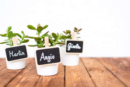 oxidated: Cute pot plants with name signs Stock Photo