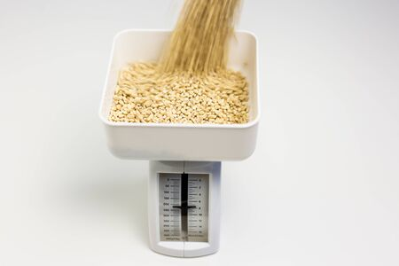 Barley kernels being pourned into the bin of a kitchen scale  Stock Photo