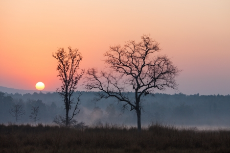 At the Kanha Tiger Reserve in north central India Banco de Imagens