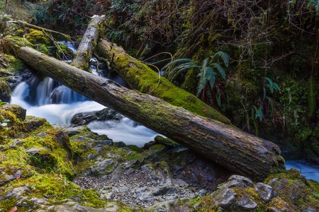 Water flows under a tree fall on the Falls Creek section of Quinault Trail in the Olympic National Forest, Washington