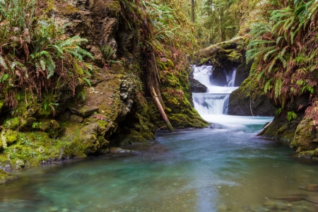 A cascading waterfall at Willaby Creek near its flow into Lake Quinault in the Olympic National Forest, Washington