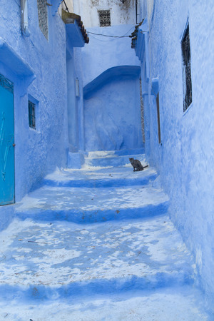 A cat sits on the stairs in the blue painted village of Chefchaouen, Morocco
