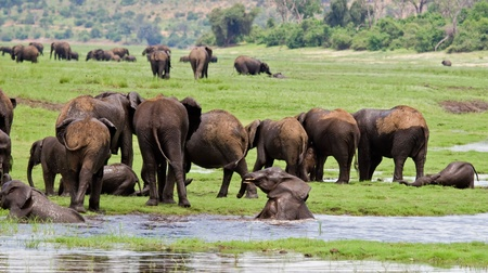pozo de agua: Un grupo de elefantes en el abrevadero; Loxodonta africana; Botswana Foto de archivo