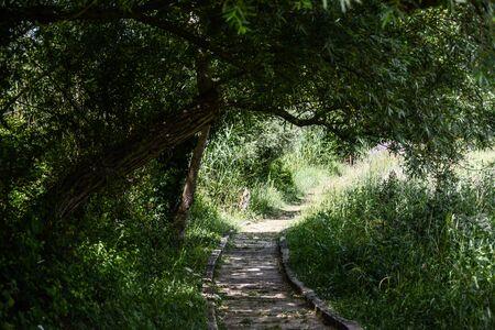 passage: Passage under the tree