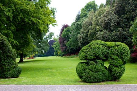 hedging: sheared hedges