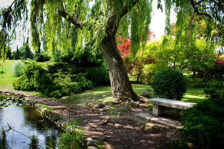 weeping willow: beautiful garden in a natural park