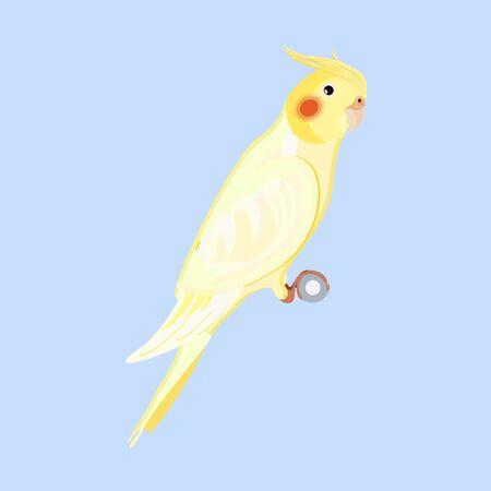 Vector Lutino Cockatiel, Cockatoo Parrot Illustration