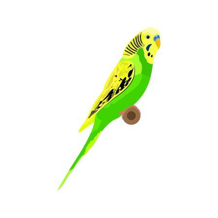 Vector Green Budgie Parrot. Australian Parakeet Realistic 矢量图像