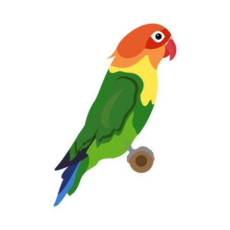 Vector Fischer's Lovebird