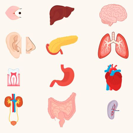 Iinternal organs of the human body, plus the nose and ear