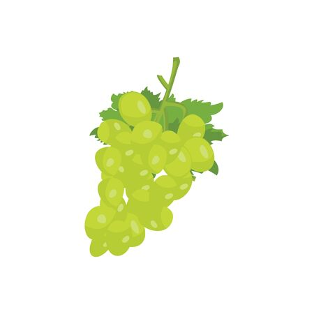 Grape vector isolated on white background